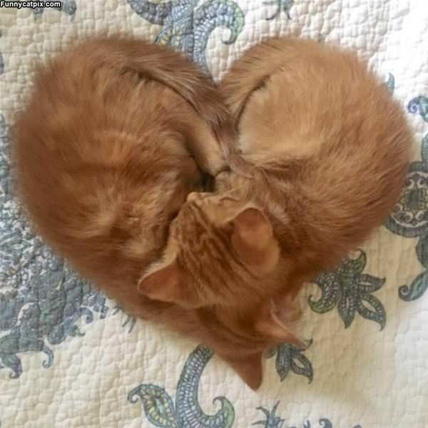We Made A Heart