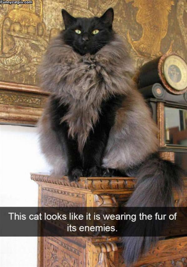Wearing A Fur