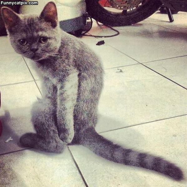 我的尾巴够长吗? - 雪山 - .