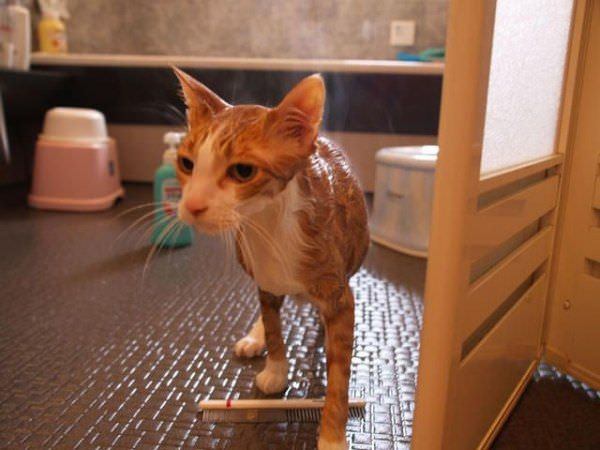 Wet Cat Is Mad