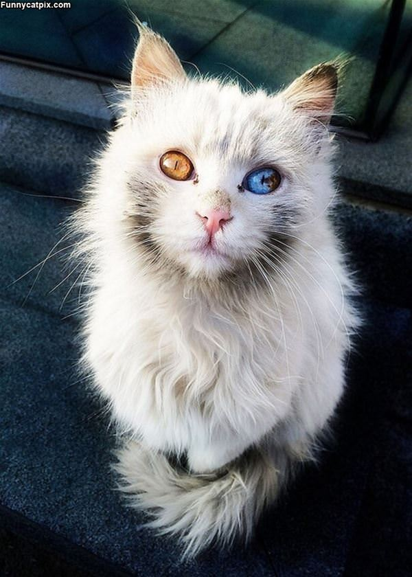 What A Beautiful Cat