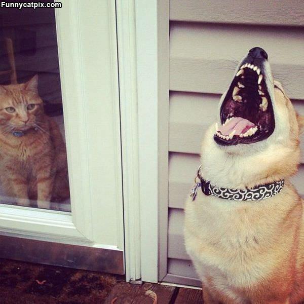 笑你老猫被关在家 - 雪山 - .