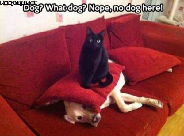 What Dog Are You Talking About