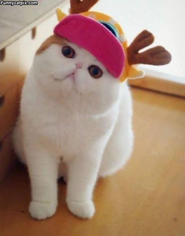 我的圣诞礼物 - 雪山 - .