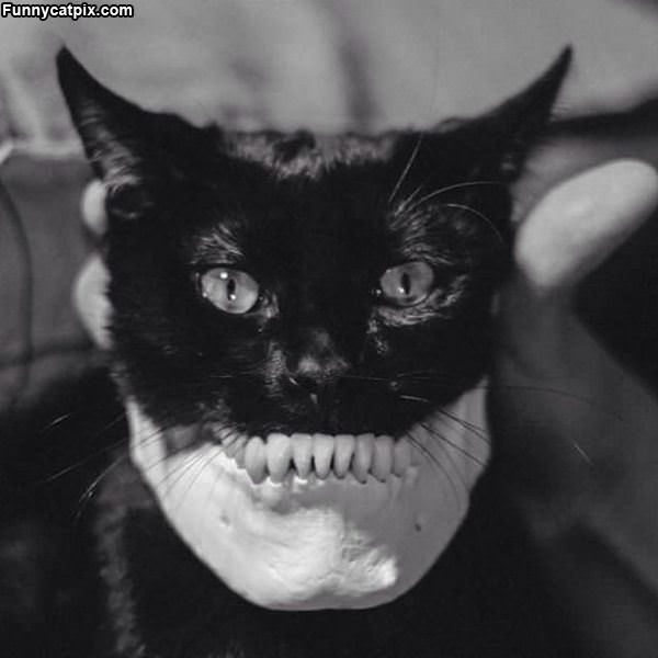 What Nice Teeth You Have