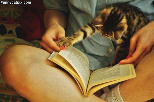 读书之乐 - 雪山 - .