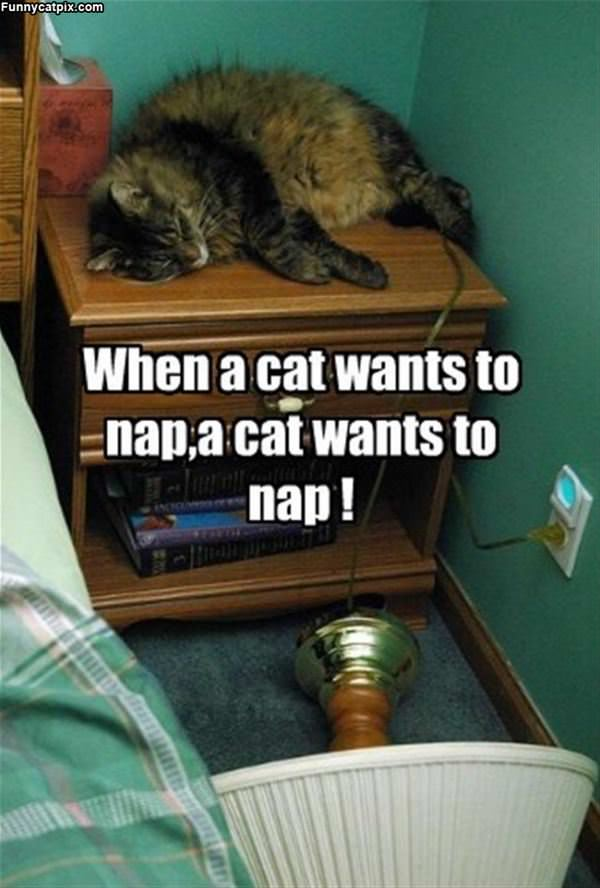 When A Cat Wants To Nap