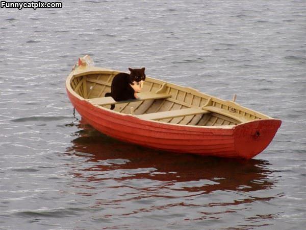 《老猫与海》的故事 - 雪山 - .
