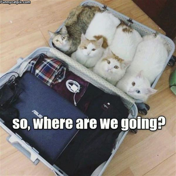 Where We Going