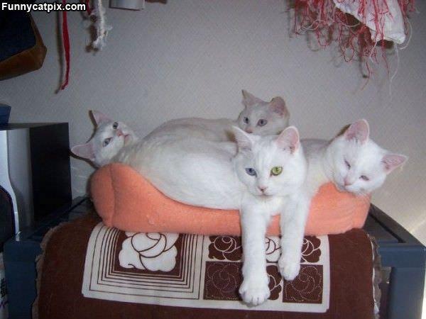 White Cats
