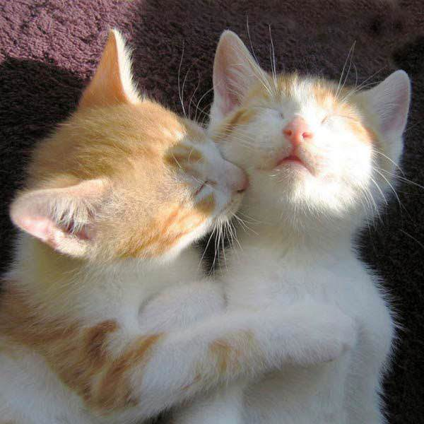 cats making out picture