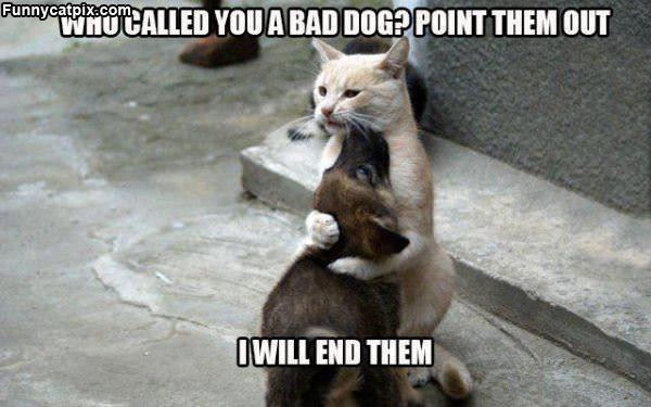 Who Called You A Bad Dog