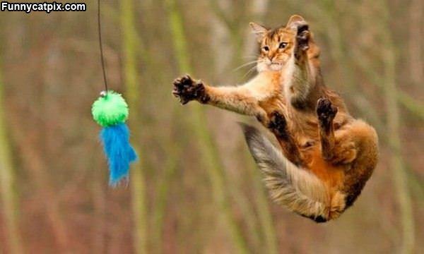 Wild Jump Attack