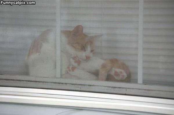 Window Yoga