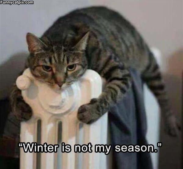 Winter Is Not My Season