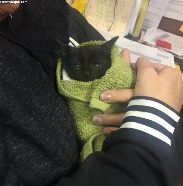 Wrapped Up Kitty