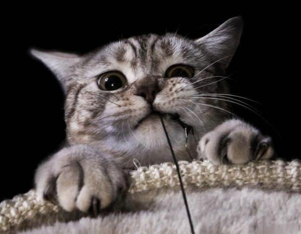 Wrarrr Cat