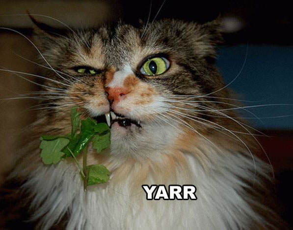 yarr_pirate_cat.jpg