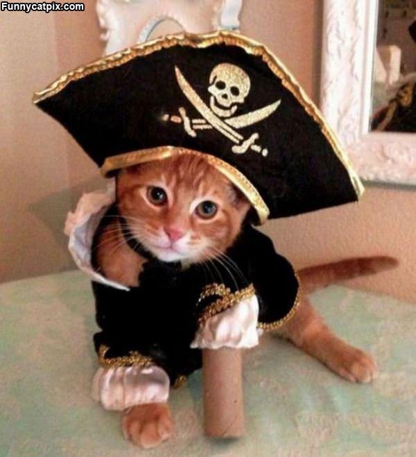 Yarrrr I Iz A Pirate