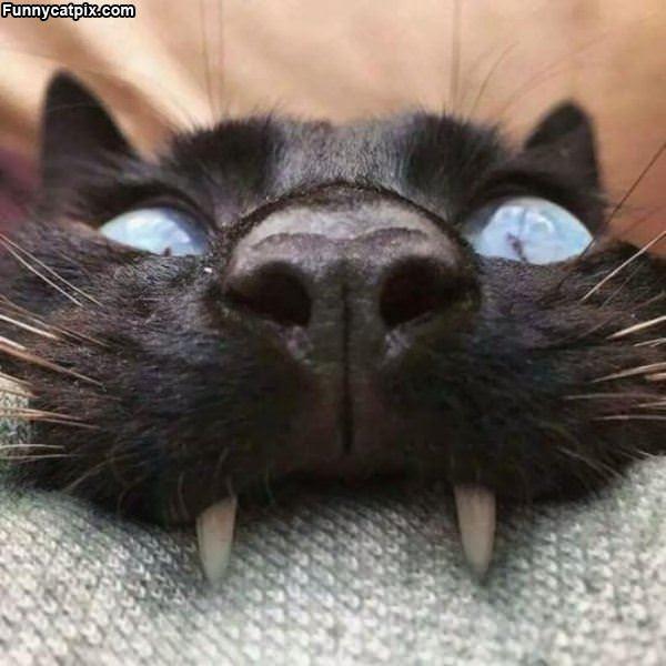 Yarrrrrrrr Cat