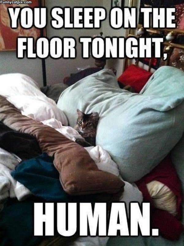 You Sleep On The Floor
