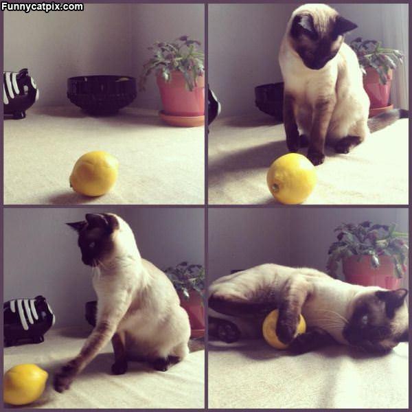 You Understand Me Lemon