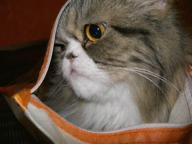 Zipper bag Cat